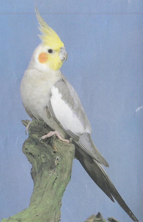 cage bird shows