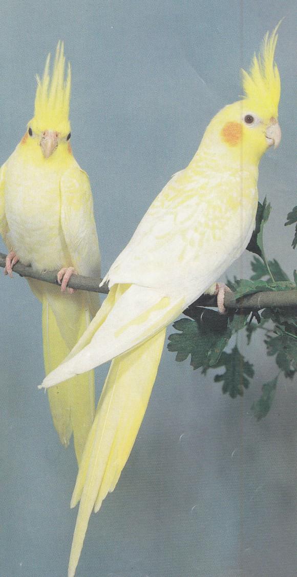 ring a bird