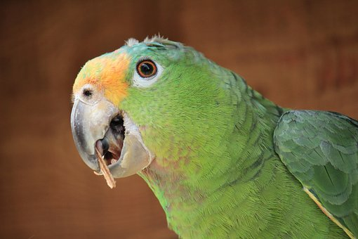naughty parrot