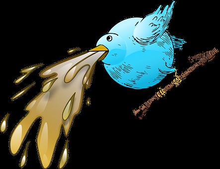 take bird to vet