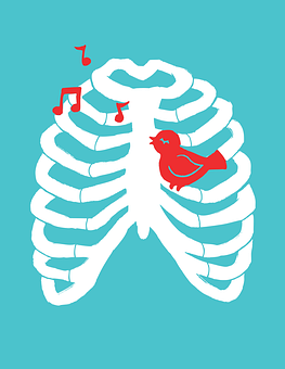 birds breathing system