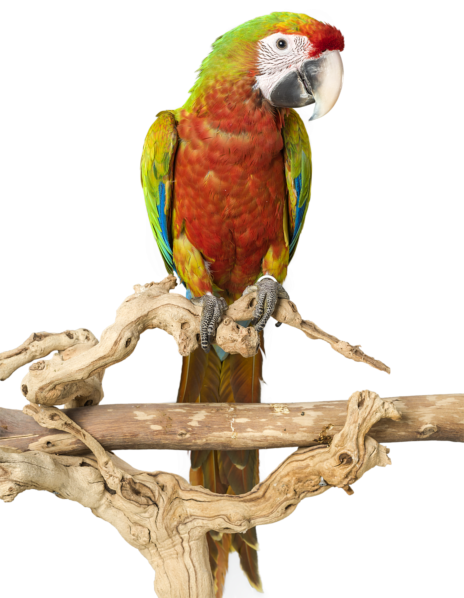 parrot playstand