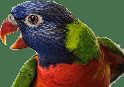 do parrots make good pets
