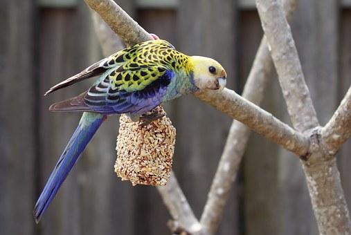 Outdoor Bird Aviaries
