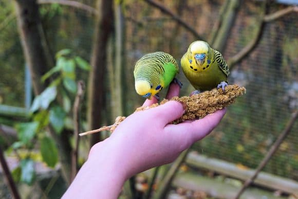 how to hand feed a bird