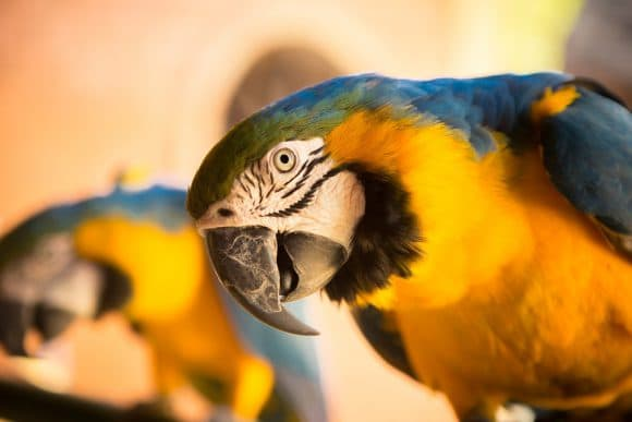 cpr on birds