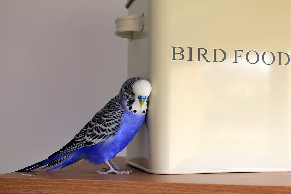 all about pet birds
