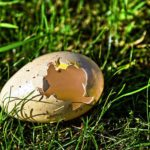 how to hatch an egg