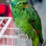 aspergillosis in birds