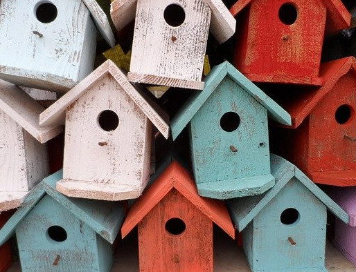 domesticated birds