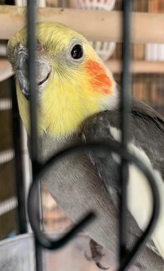 my pet birds