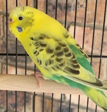 my pet bird