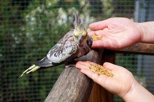 where to buy bird seed