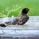 how to bathe your bird
