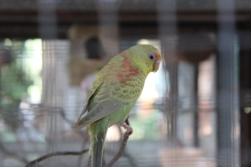 keeping aviary birds