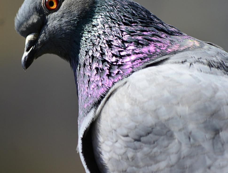 birds in aviaries