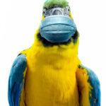 common bird injuries