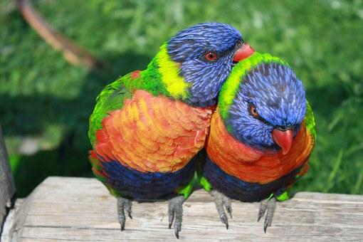 nectar eating birds