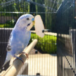 how to keep a bird cage clean