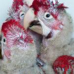 breeding birds for profit