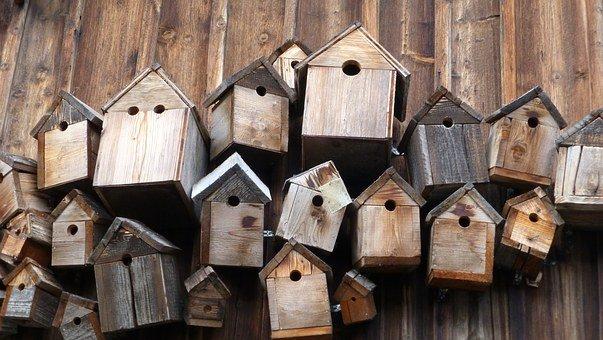 bird nest guide